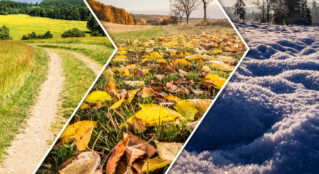 4 Essential Autumn Driving Tips